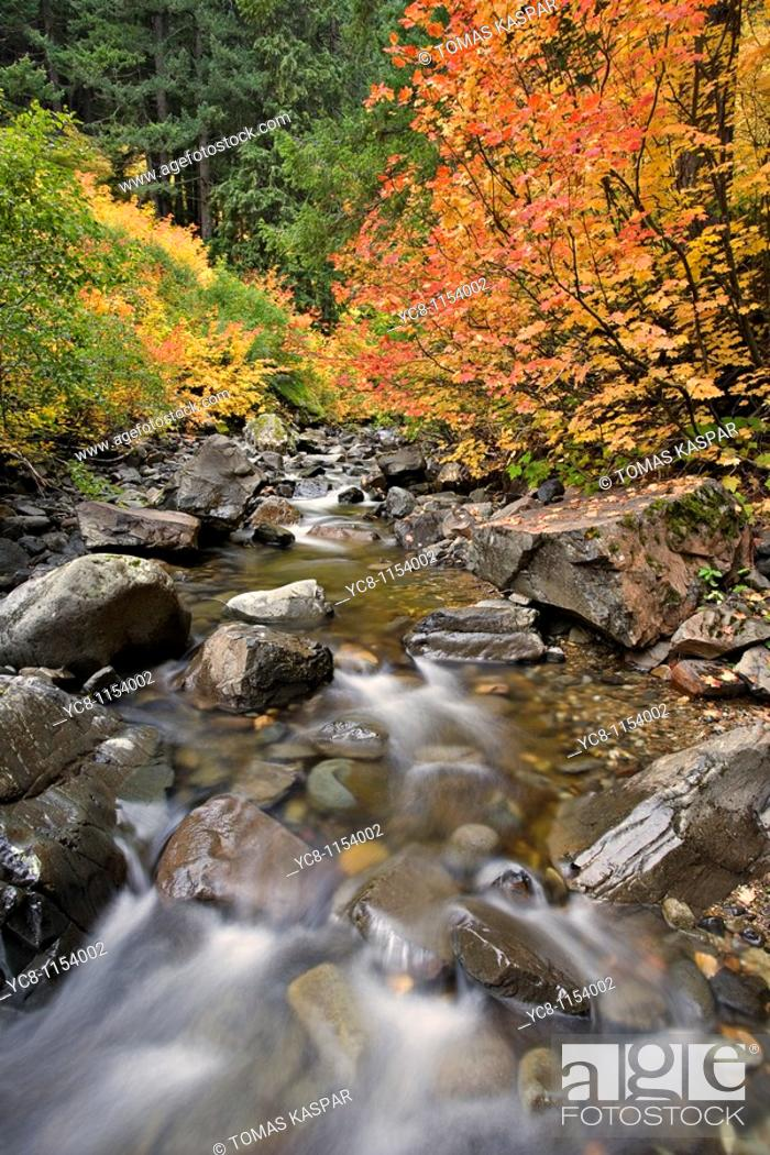Stock Photo: Gifford Pinchot National Forest.