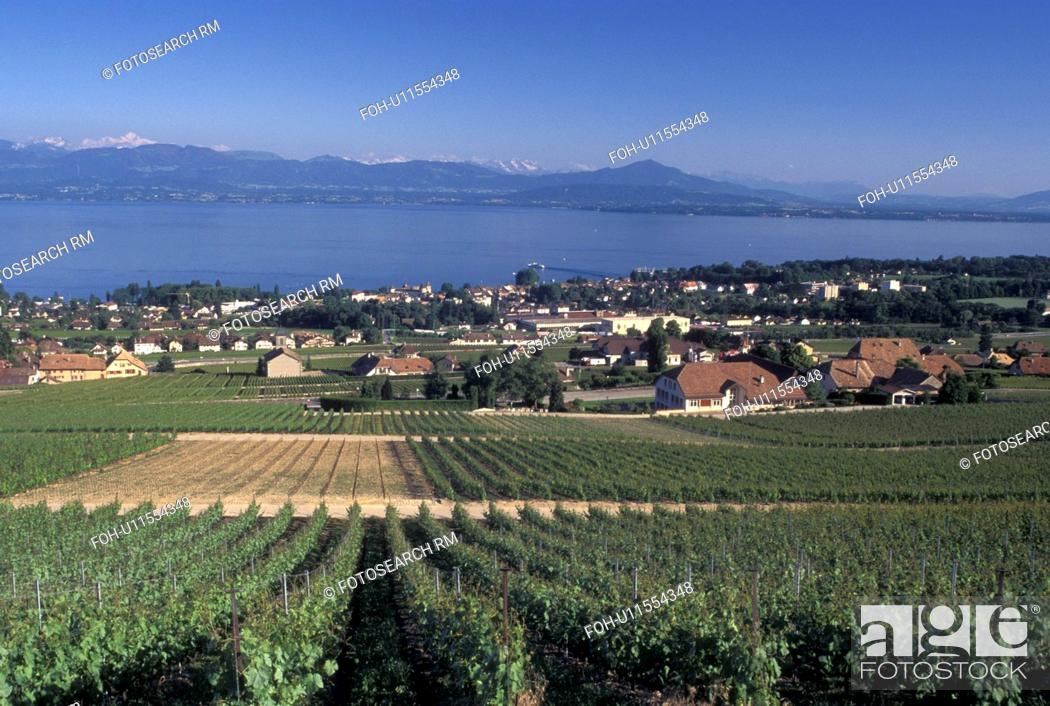 Stock Photo: Switzerland, La Cote, vineyard, Lake Geneva, Rolle, Vaud, Scenic view of the countryside covered with vineyards and the village of Rolle along Lac Leman in the.
