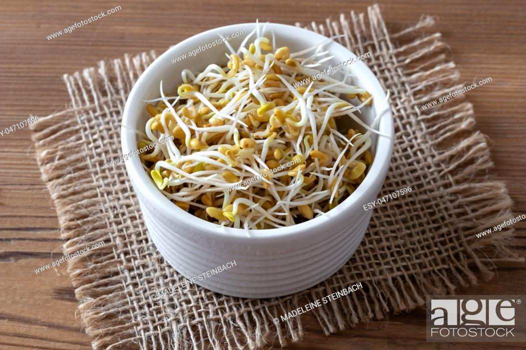 Stock Photo: Sprouted fenugreek seeds in a bowl.