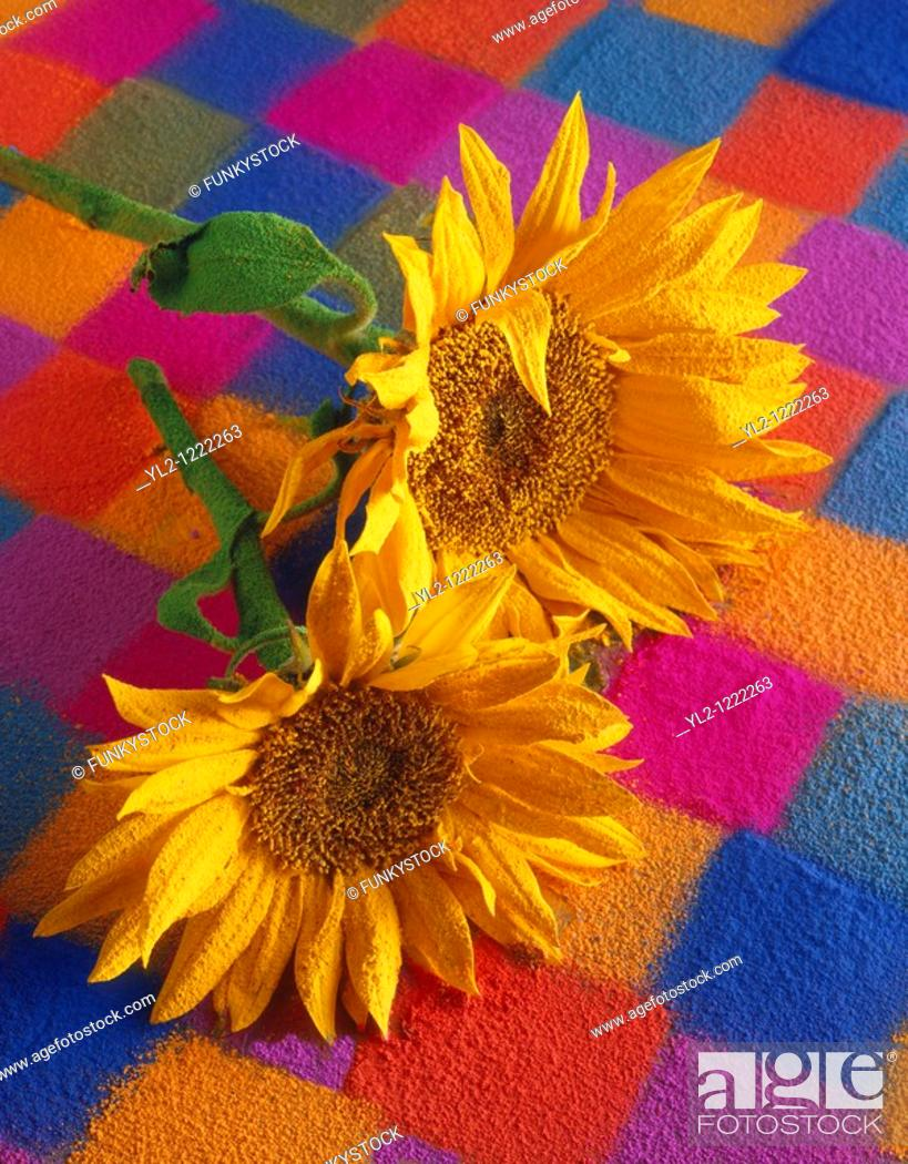 Stock Photo: Stylised sunflowers with a textured covering against a patchwork backgound.
