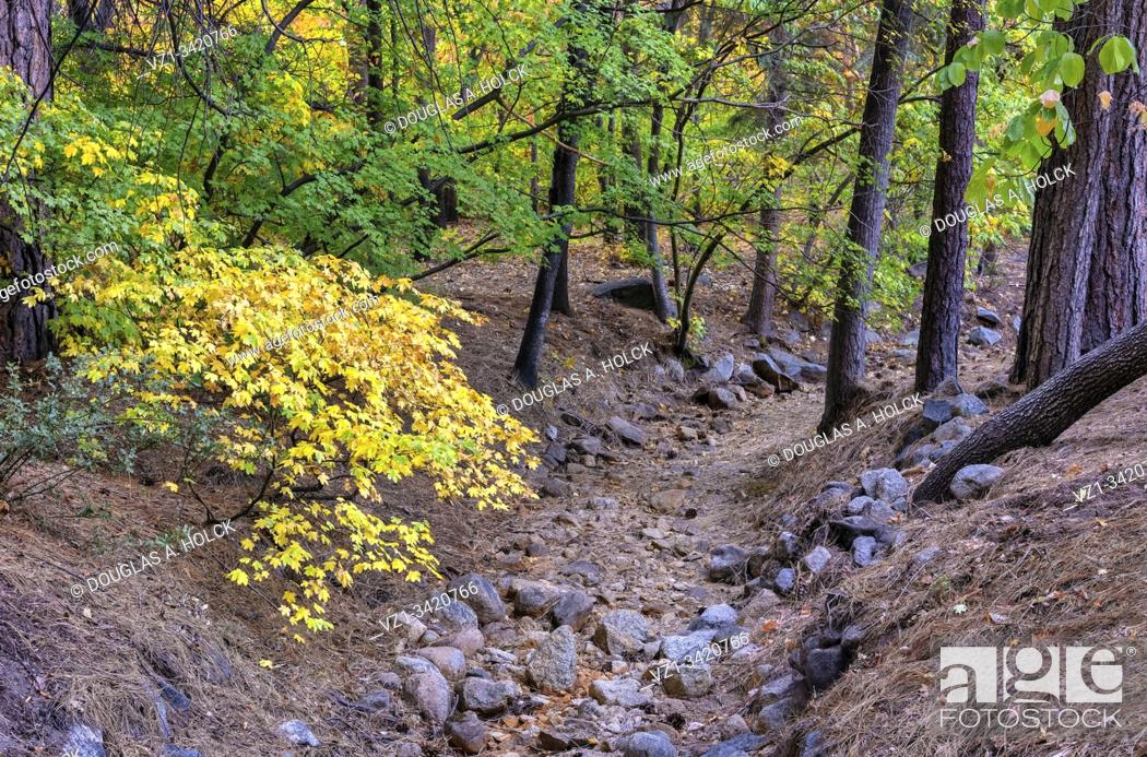 Imagen: Fall Colors along Dry Stream Bed of Ahwahnee Hotel Yosemite National Park CA USA World Location.