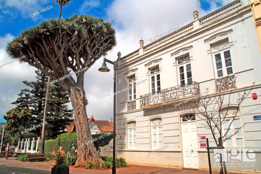 Stock Photo: Drago tree in San Cristobal de La Laguna Tenerife island.