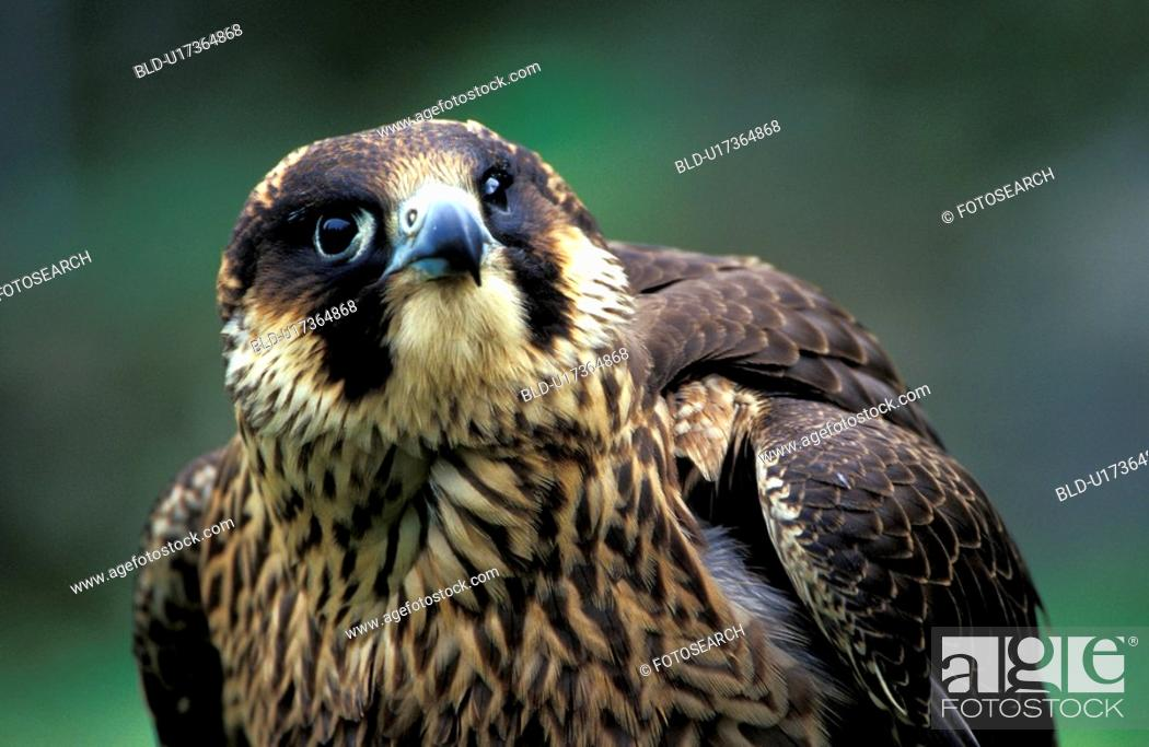 Stock Photo: federn, animals, aves, beak, bill.