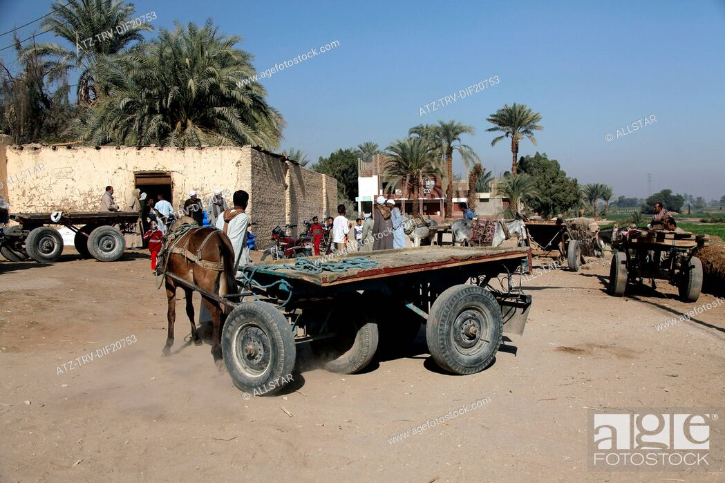 Imagen: VILLAGE PEOPLE WITH DONKEY & CART; VILLAGE, NEAR LUXOR, EGYPT; 14/01/2013.