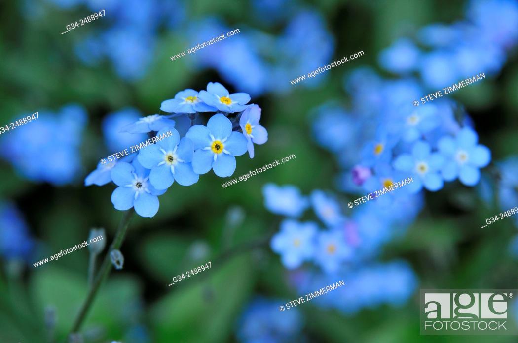 Stock Photo: So Blue.
