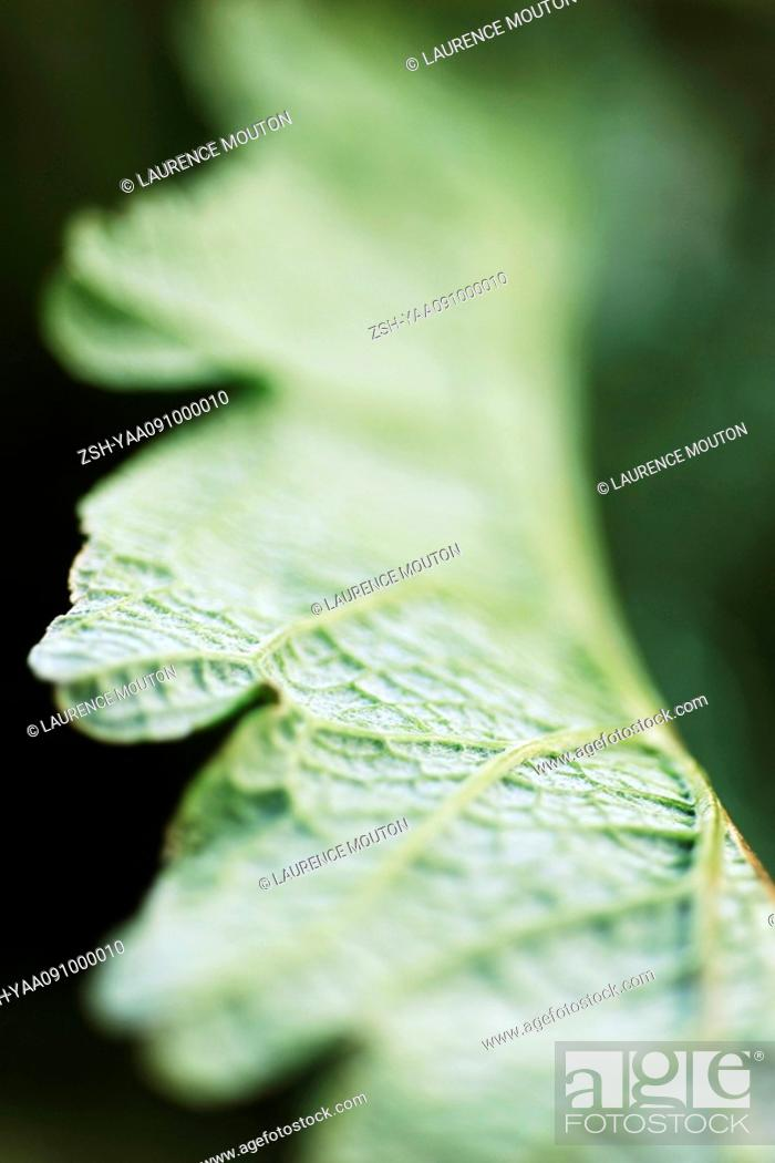 Stock Photo: Leaf, extreme close-up.