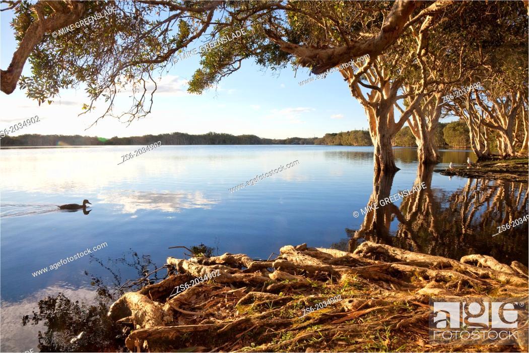 Imagen: Lake Ainsworth, Lennox Head, NSW, Australia.