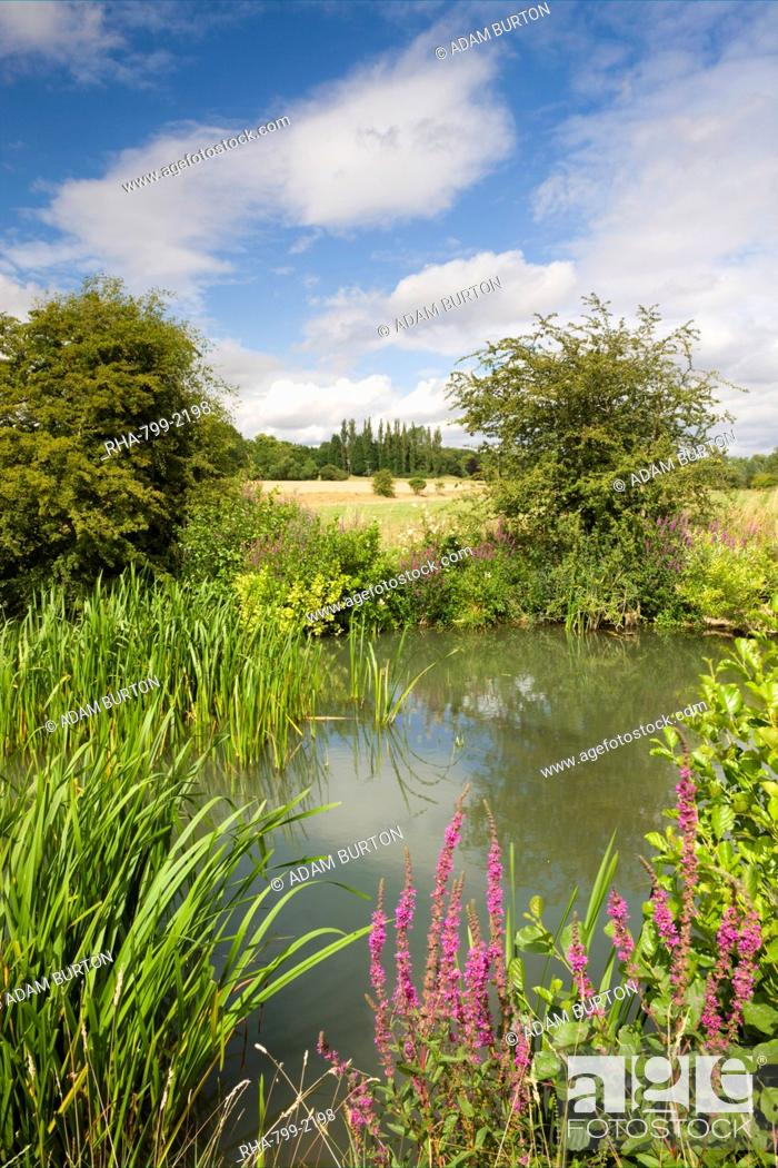 Stock Photo: Wildflowers growing beside the River Windrush near Burford, The Cotswolds, Oxfordshire, England, United Kingdom, Europe.