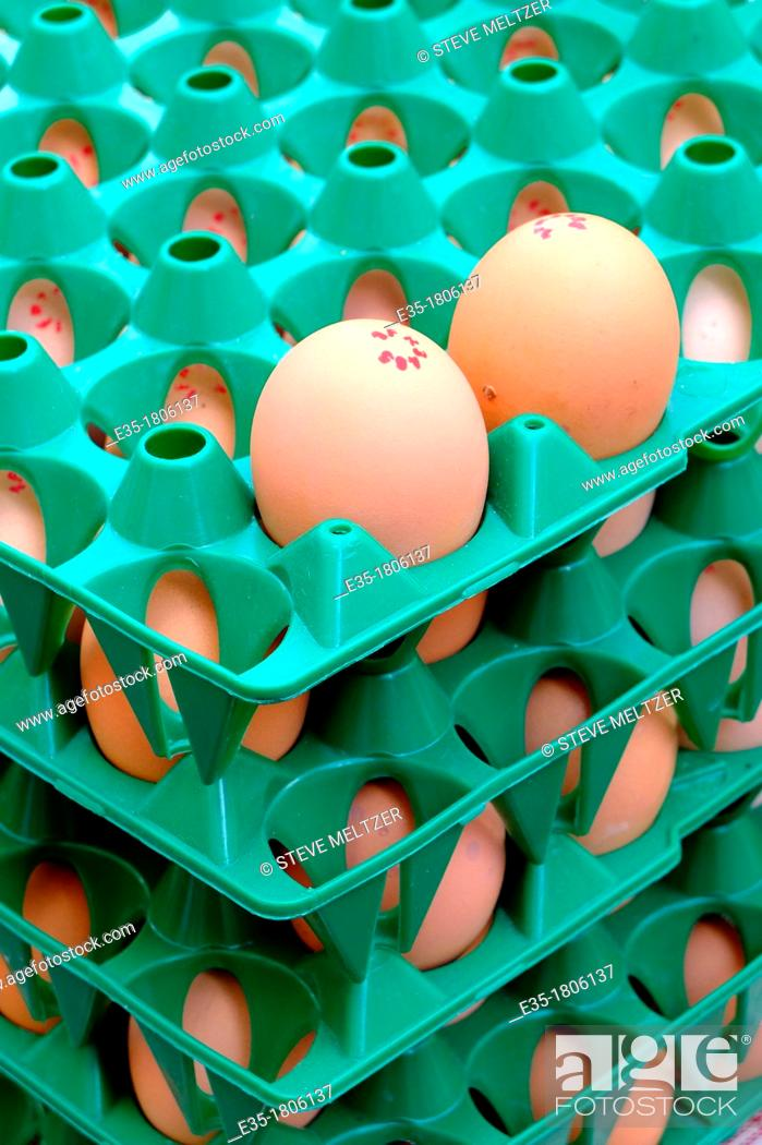 Stock Photo: Organic farm eggs for sale at a market in France.