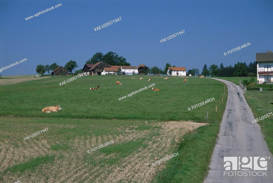 Stock Photo: The Curve And Cow In Switzerland.