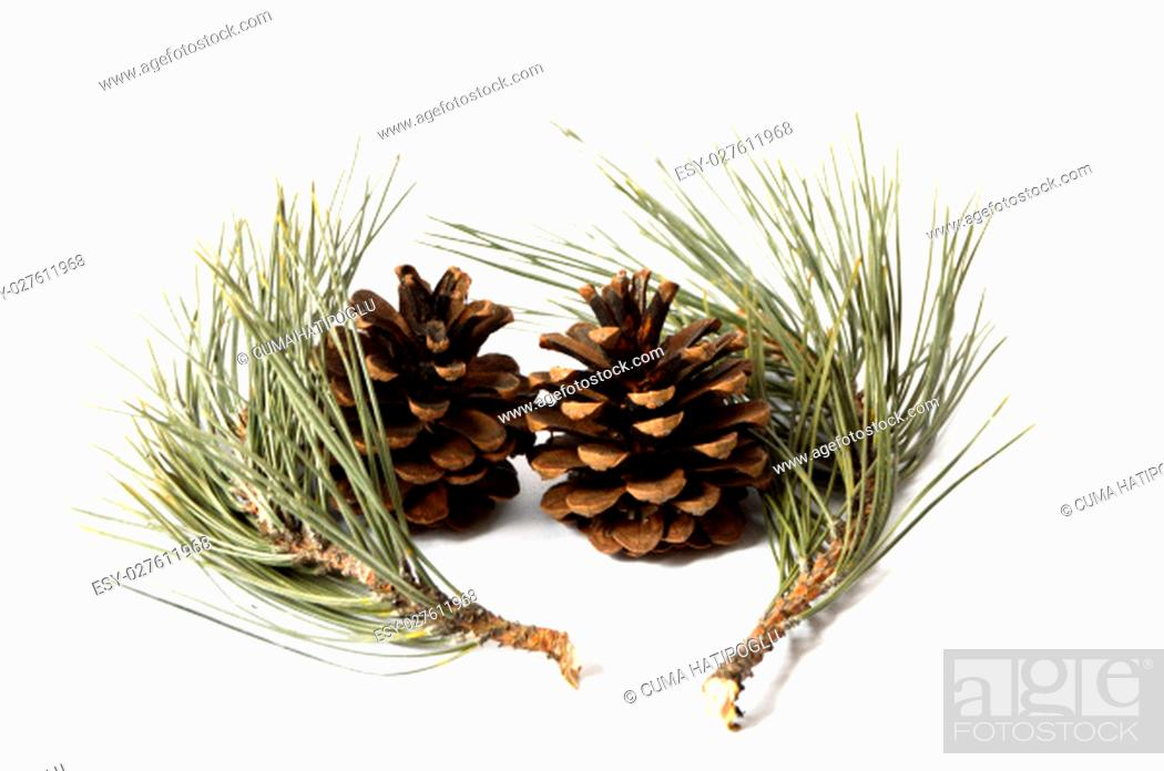 Stock Photo: Pictures of pine cones.