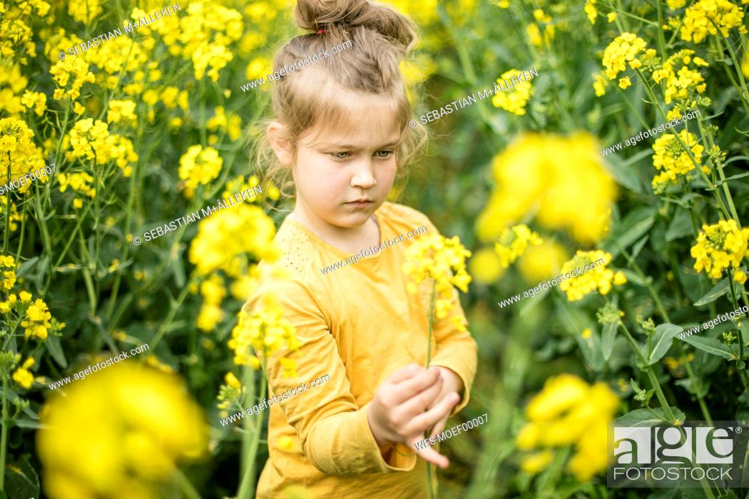 Stock Photo: Girl examining plant in rape field.