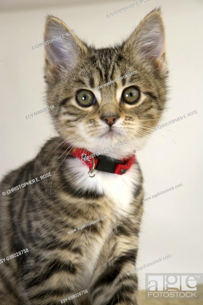 Stock Photo: Cute kitten staring wide eyed at the camera.