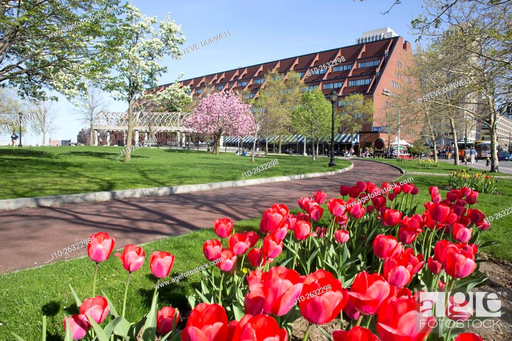 Stock Photo: Spring tulips, Christopher Columbus Waterfront Park and Boston Marriot Long Wharf Hotel, Greenway, Boston, MA.