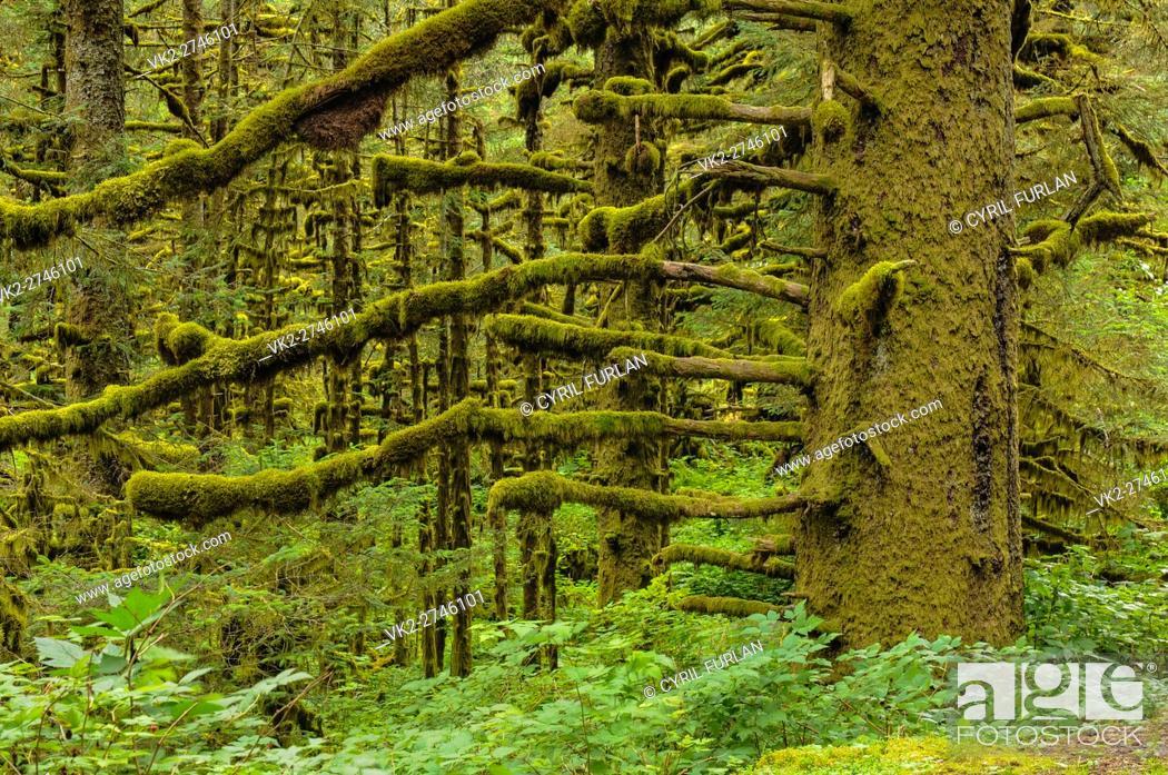 Stock Photo: Temperate Rainforest Kodiak Island Alaska.