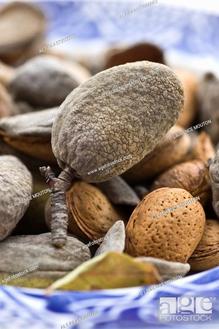 Stock Photo: Almonds.