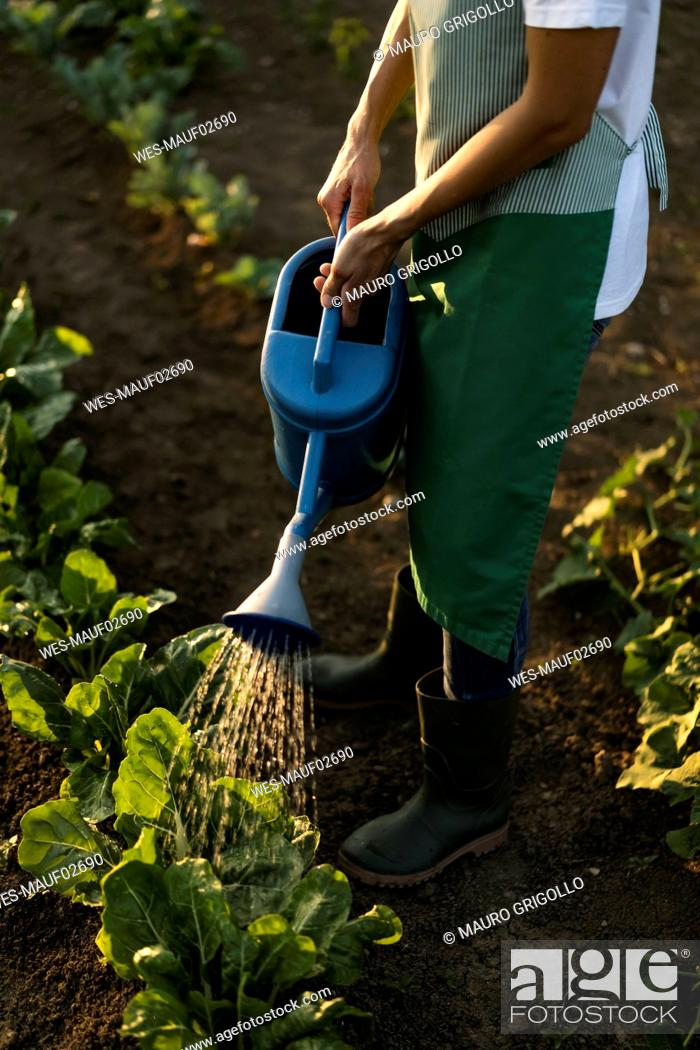 Stock Photo: Woman watering platns in garden.