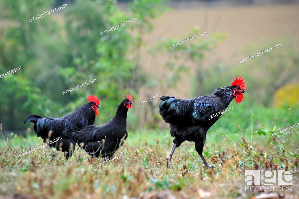 Stock Photo: Quatre Graces farm, Beaumarches, Gers department, Midi-Pyrenees, southwest of France, Europe.