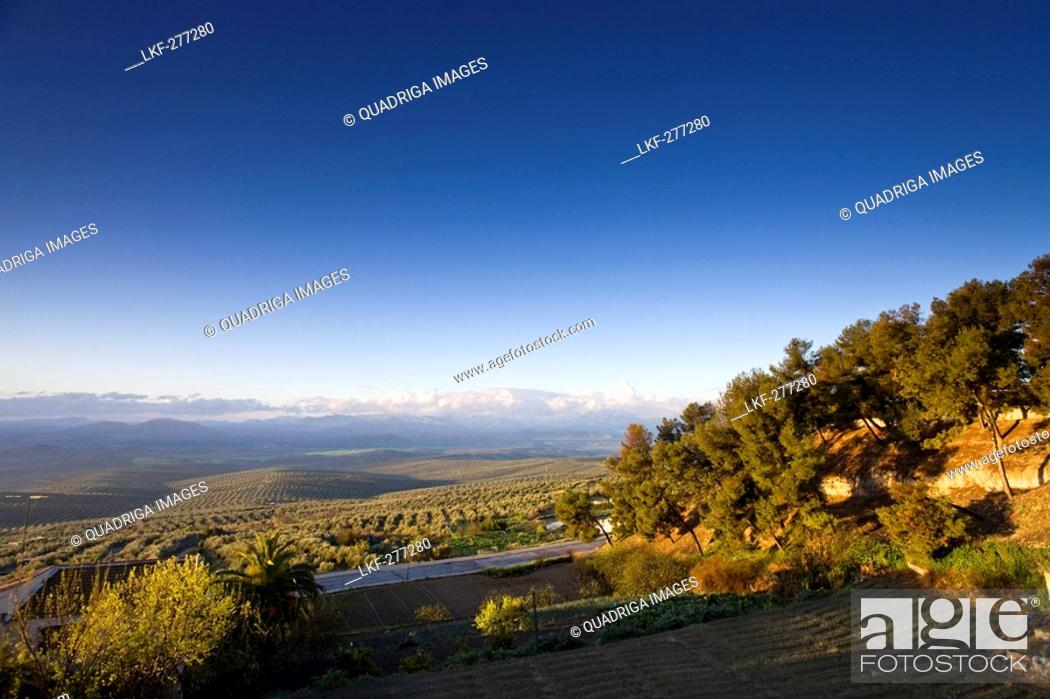 Stock Photo: Landscape with olive trees around Ubeda seen from Redonda de Miradores, Province Jaen, Andalucia, Spain.