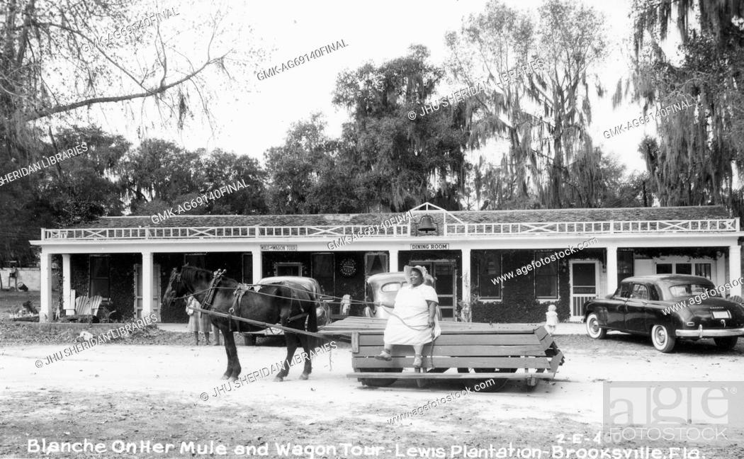 Imagen: Full-body portrait of African American Woman on a wagon pulled by a mule, on the Lewis Plantation in Brooksville, Florida, wearing a white dress.
