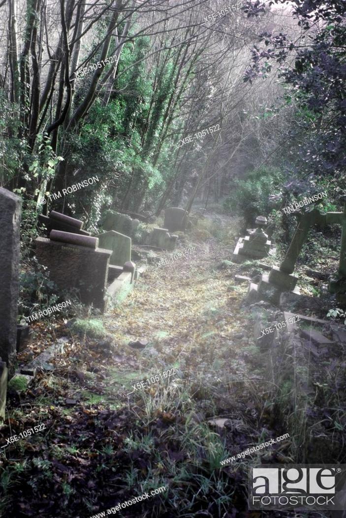 Stock Photo: Path through overgrown cemetery in misty light.