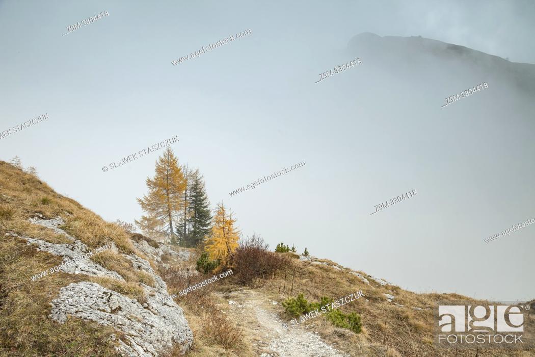 Stock Photo: Foggy autumn day in the Carnic Alps near Sappada, Udine, Italy.