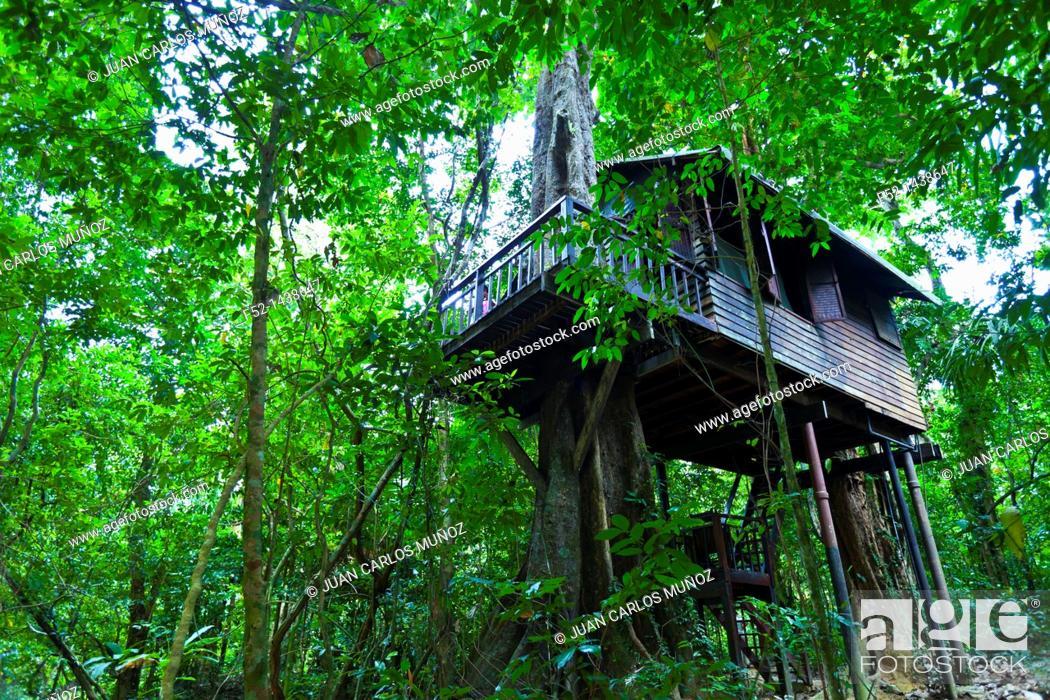 Stock Photo: Our Jungle House Accommodation  Khao Sok National Park  Suratthani Province, Thailand, Asia.