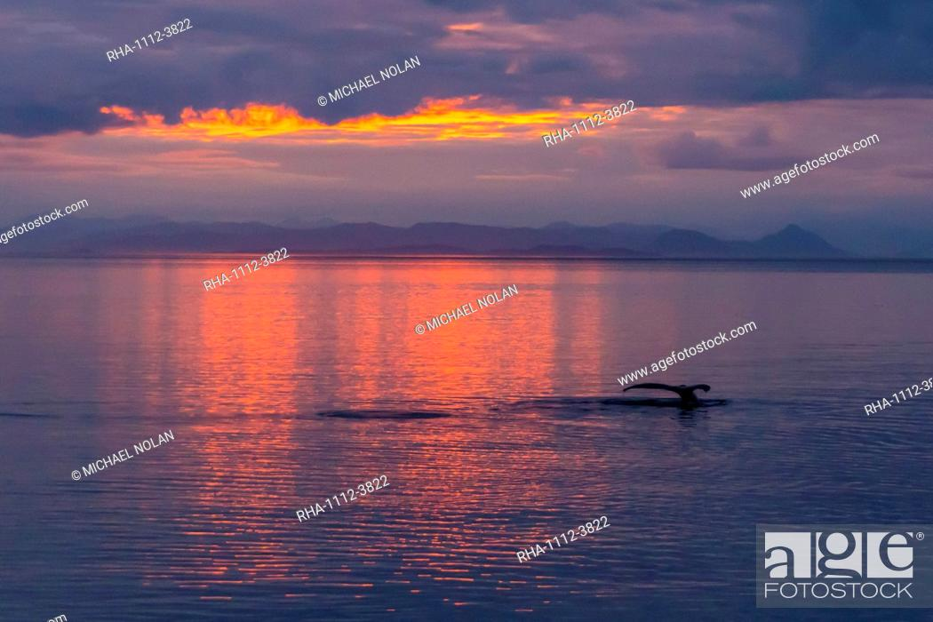 Stock Photo: Humpback whale (Megaptera novaeangliae), flukes-up dive at sunset in Frederick Sound, Southeast Alaska, United States of America, North America.