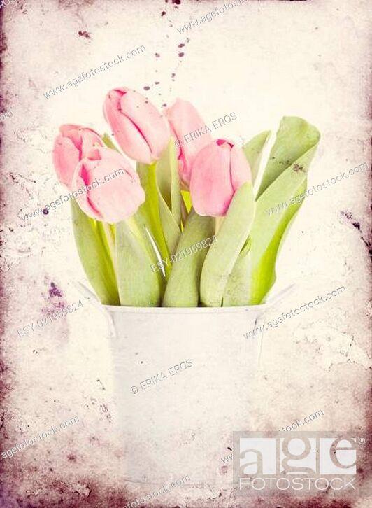 Stock Photo: Vintage tulips.