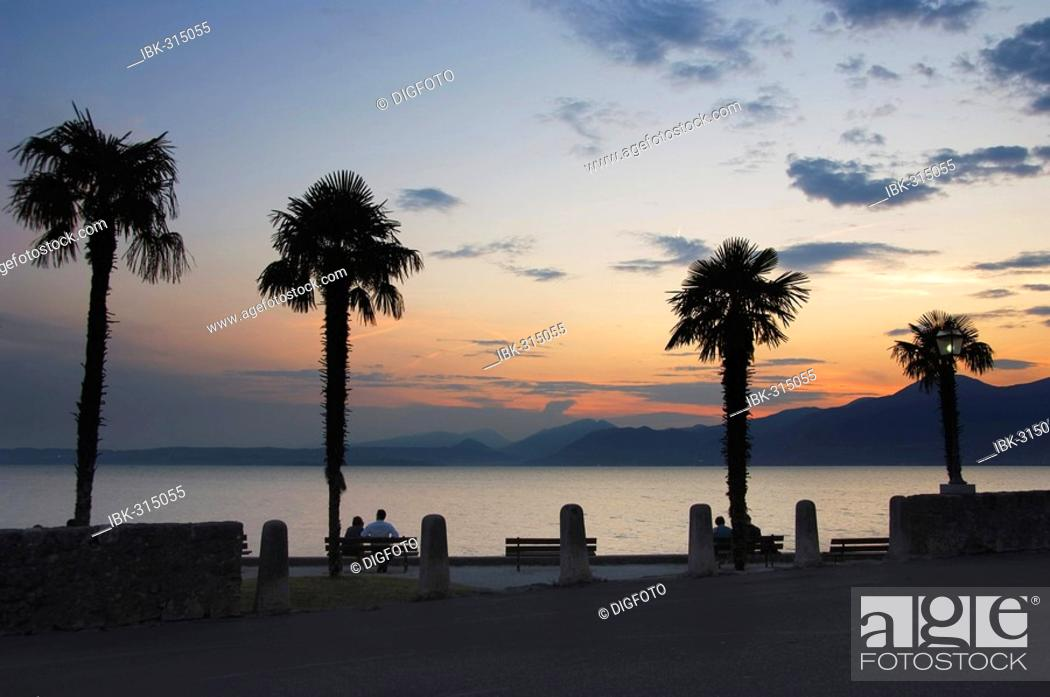 Stock Photo: Palm trees at the lakeside promenade at dusk, Torri del Benaco, Lake Garda, Veneto, Italy.