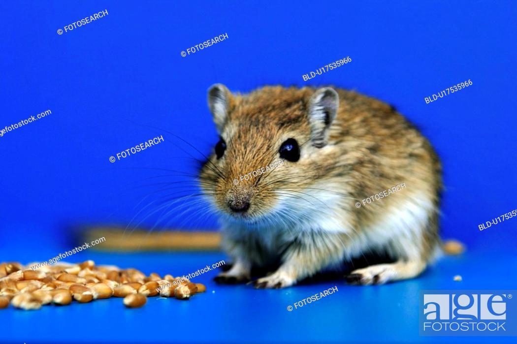 Stock Photo: animals, brown, blue, beige, alfred.
