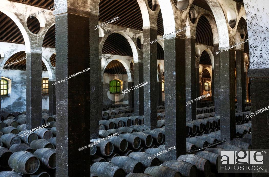 stacked oak barrels. Stock Photo - Stacked Oak Barrels In The Cellar La Catedral At Bodega Barbadillo Town Of Sanlucar De Barrameda Cadiz Province, Andalusia, Spain