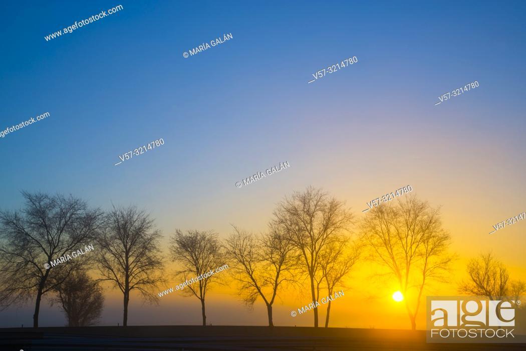 Imagen: Trees at dawn. Dos Barrios, Toledo province, Castilla La Mancha, Spain.