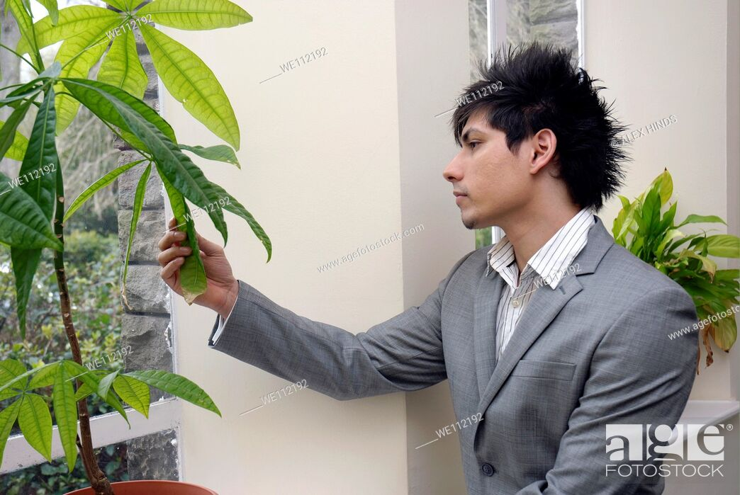 Stock Photo: A young business man looking at an office pot plant, contemplating environmental issues.