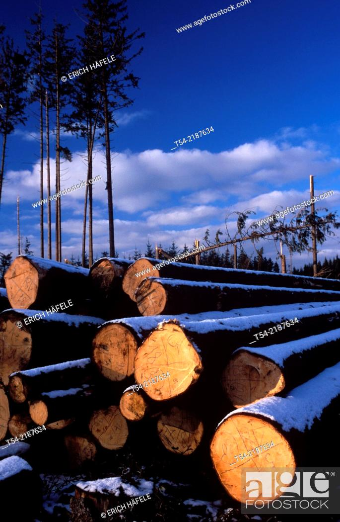 Stock Photo: Felled trees in a forest in Southern Germany.