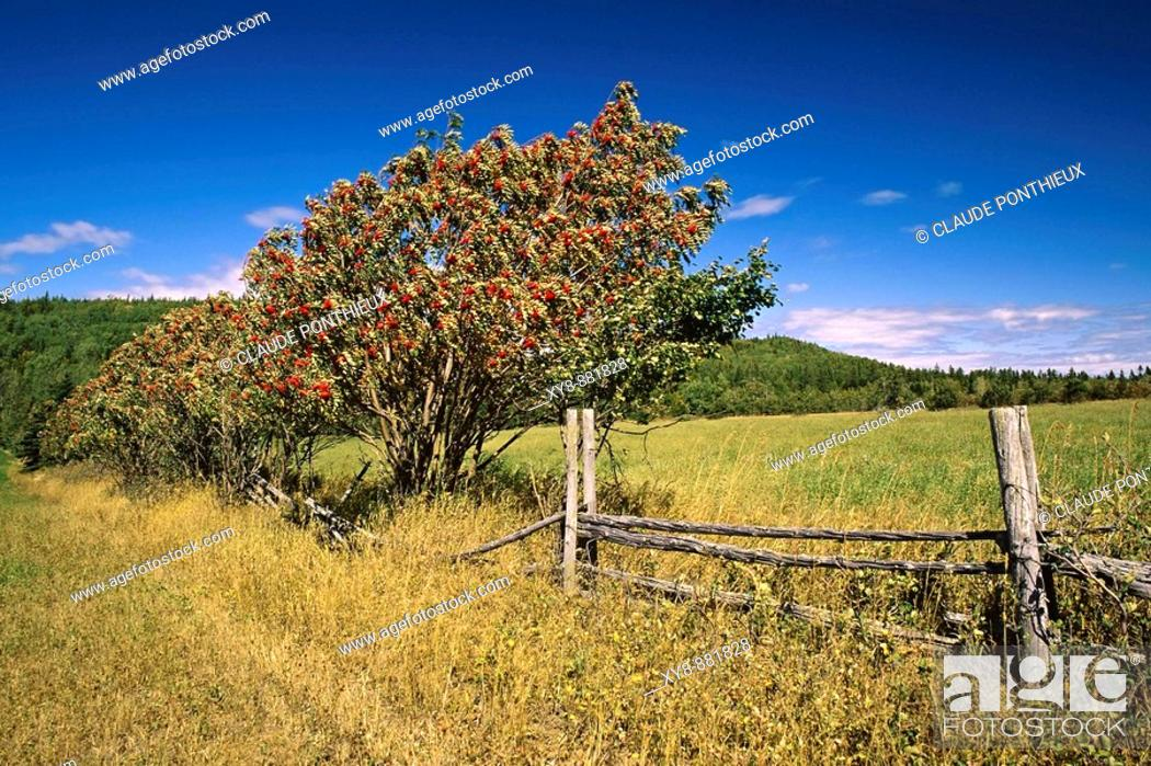 Stock Photo: Field-and-Fence.