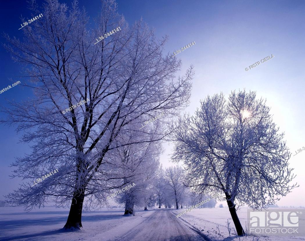 Imagen: Country road, Podlasie region, Poland.