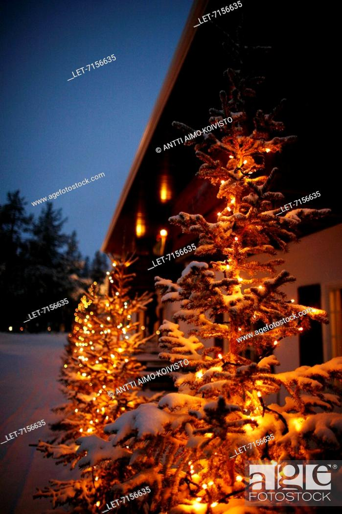 Electric Candles Are Burning In A Snowy Christmas Tree In The Yard