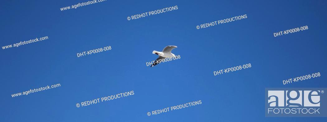 Stock Photo: Seagull in blue skies.