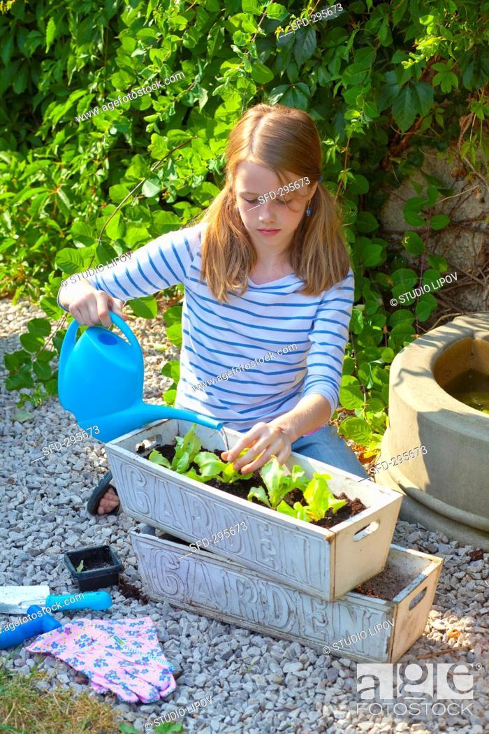 Stock Photo: A girl watering lettuce seedlings in a flower box.
