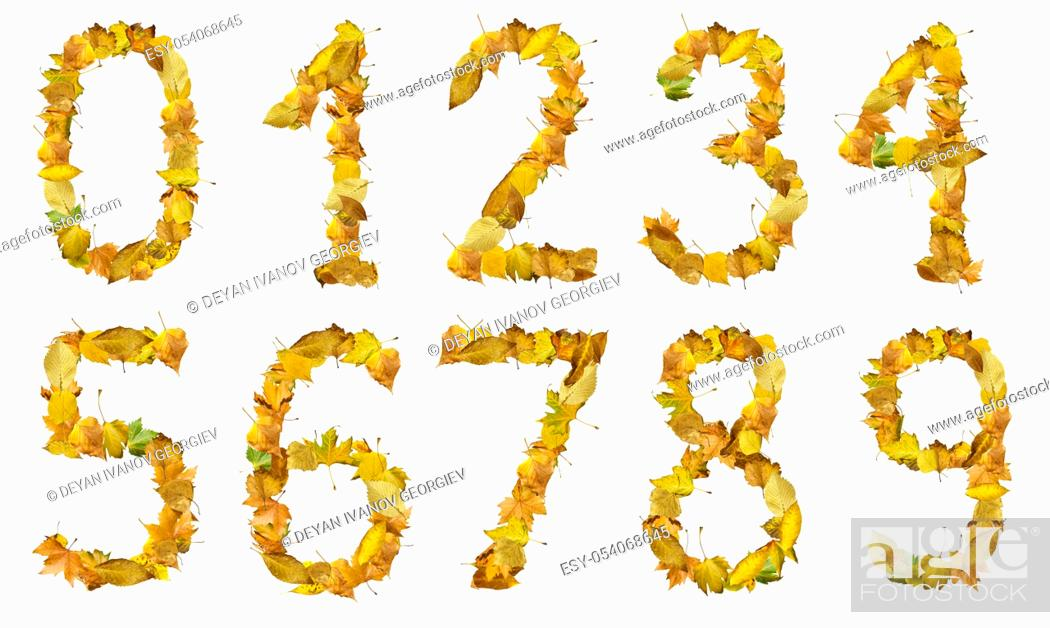 Stock Photo: Set of numbers made of autumn leaves. White isolated.