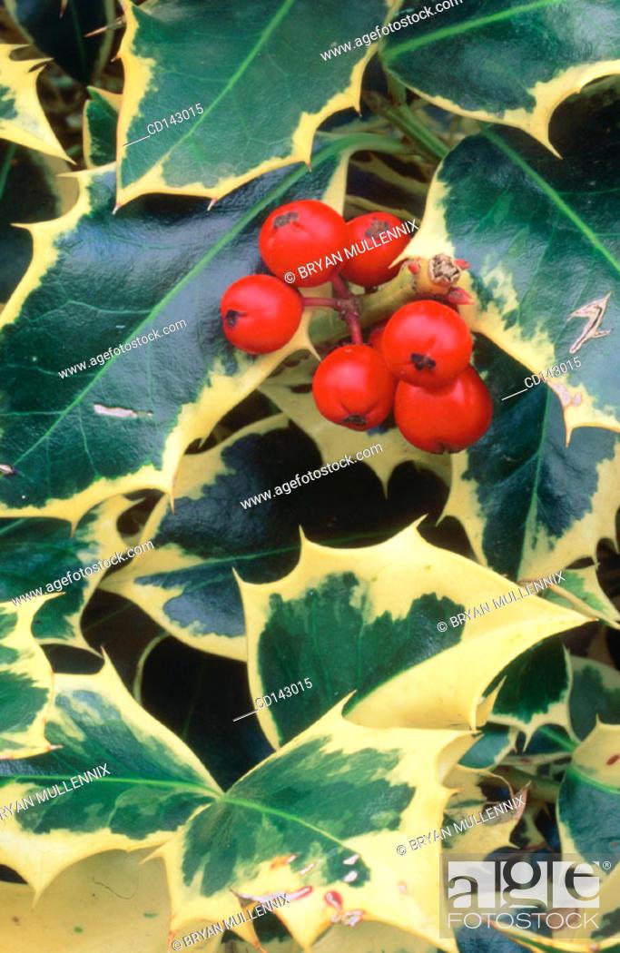 Stock Photo: Berries.