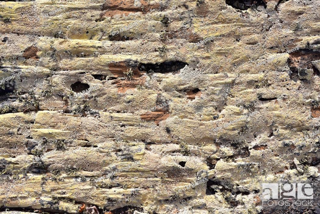 Imagen: Pertusaria pluripuncta is a crustose lichen. This photo was taken in Lanzarote Island, Canary Islands, Spain.