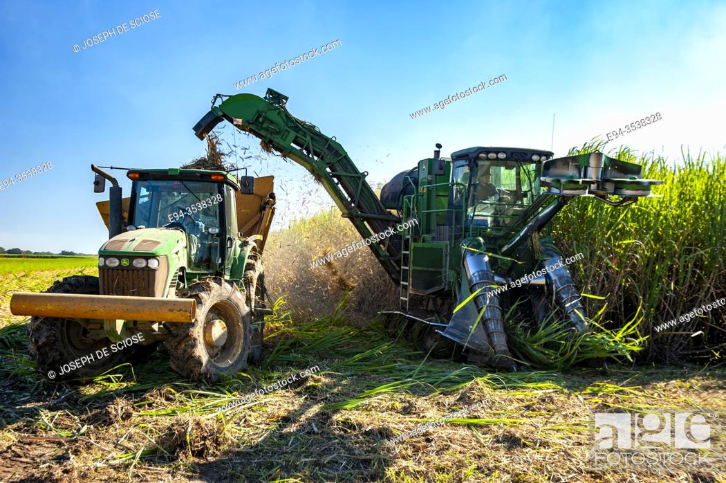 Stock Photo: Harvesting sugar cane in southern Louisianna.