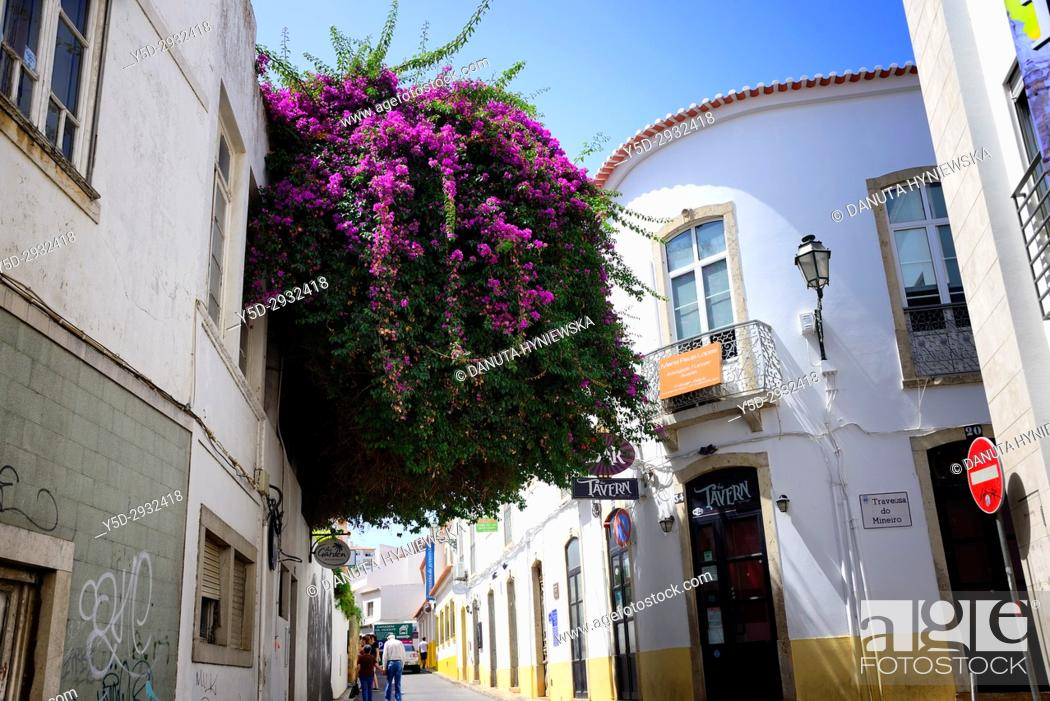 Imagen: narrow streets in historic part of Lagos city, Bougainvillaea flowering tree, Algarve, Portugal, Europe.