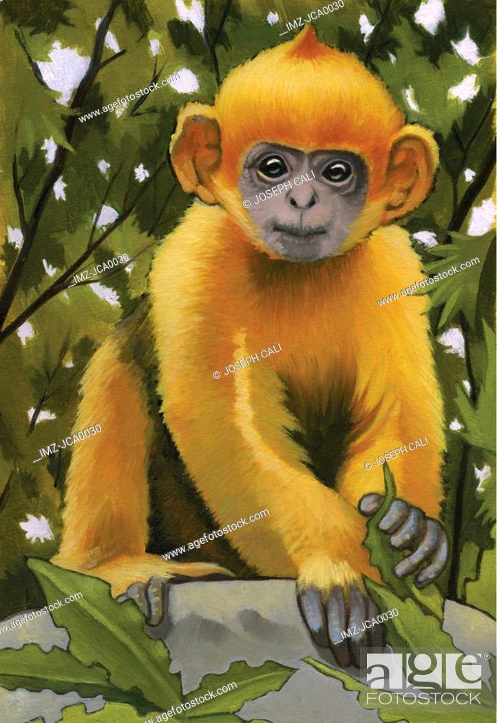 Stock Photo: An illustration of a leaf monkey.