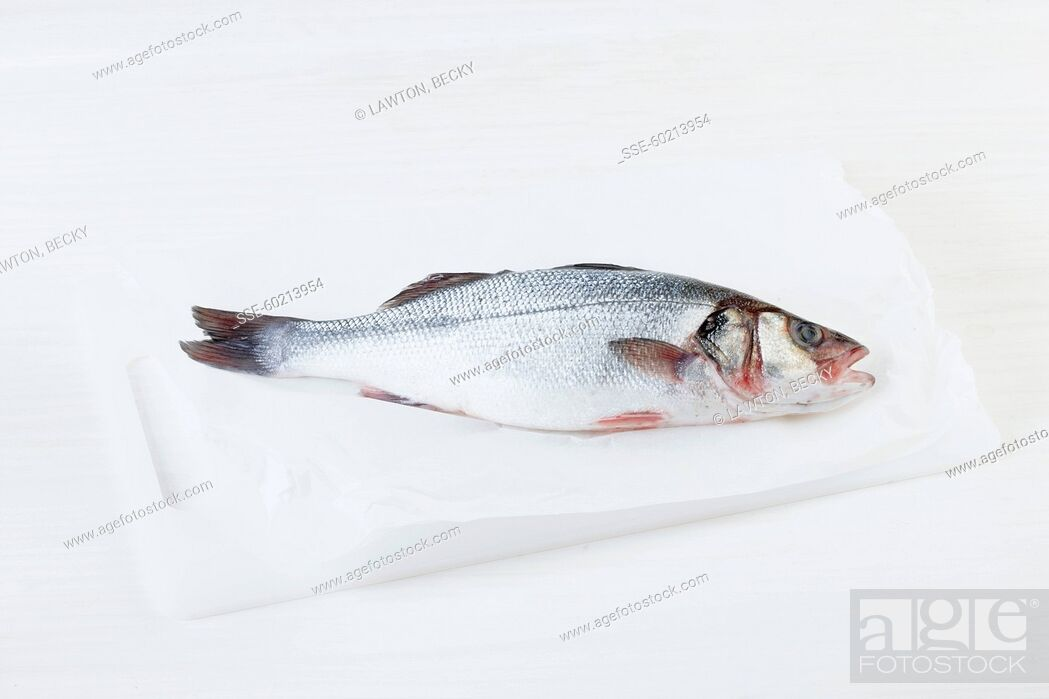 Stock Photo: Raw sea bass on a white background.