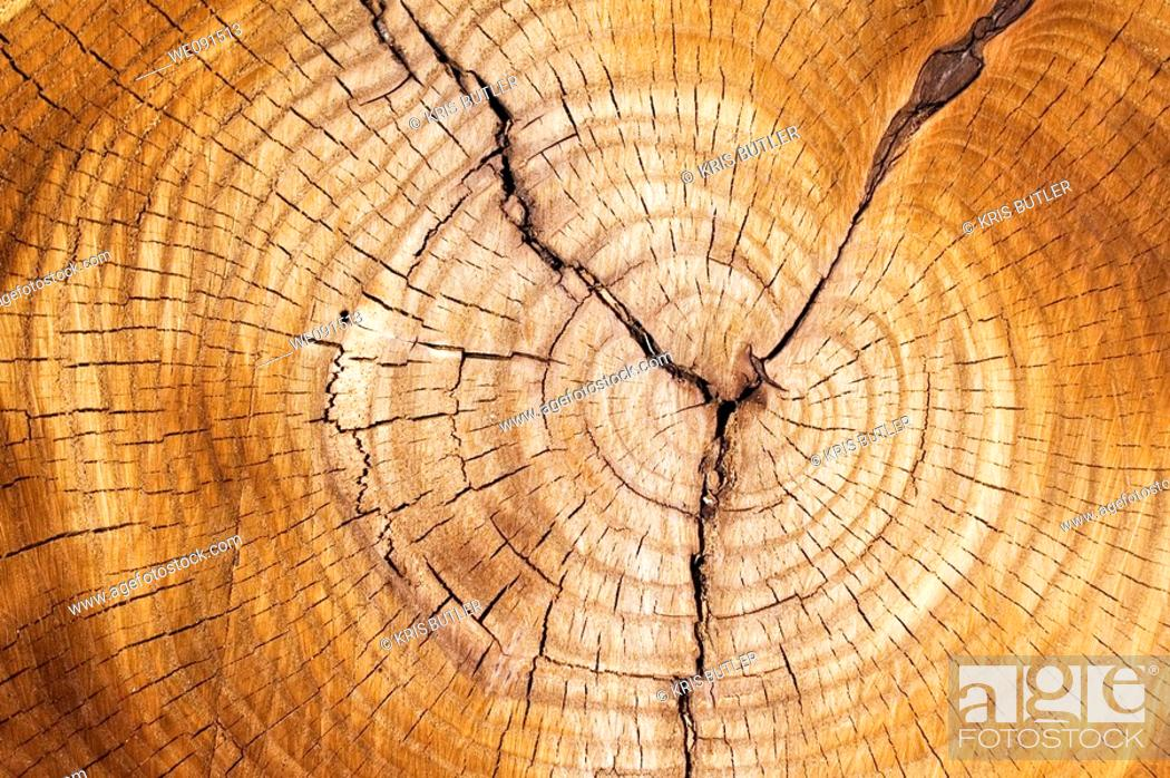 Stock Photo: Tree rings in a cut down tree.