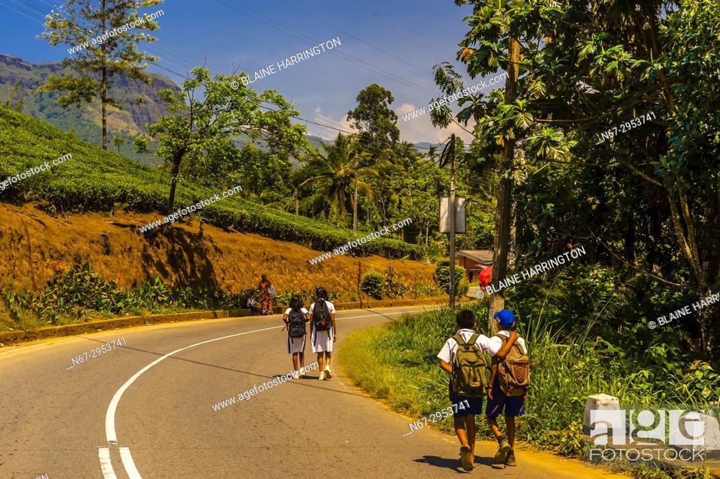 Photo de stock: School children walk along road below tea gardens, Pusselawa, Central Province, Sri Lanka.