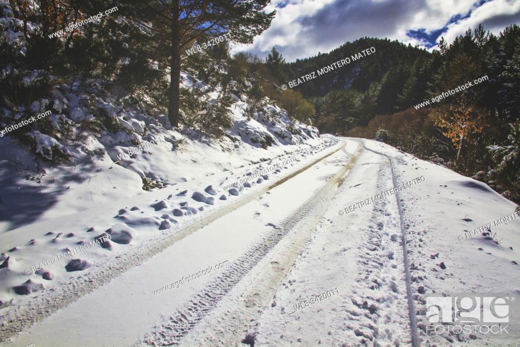 Stock Photo: Snowy road between forests in Huerta de Arriba (Burgos, Spain).